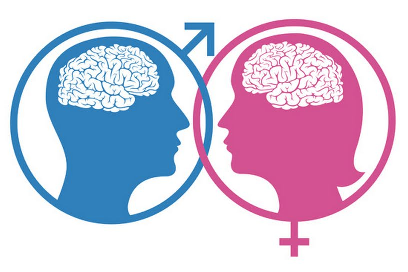 [Artigo Neuromarketing Político] Cérebro Masculino e Cérebro Feminino